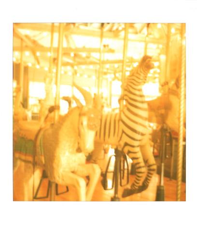 merry-go-round :: zebra