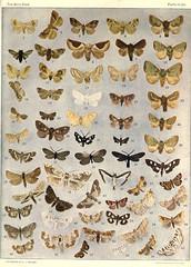 Anglų lietuvių žodynas. Žodis family pyralidae reiškia šeimos pyralidae lietuviškai.