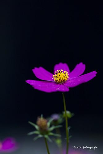 20111018-_MG_0197