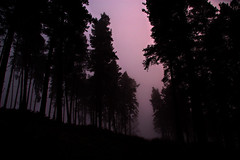 Not for St. Valentine (I_Am_Not_The_Preacher_Man) Tags: wood uk pink trees shadow red england mist black monochrome silhouette fog pine forest woodland d50 dark landscape evening twilight woods nikon purple unitedkingdom dusk magenta nikond50 pines cannock chase staffordshire damp gloaming cannockchase aonb dampness scotspine areaofnaturalbeauty blackandpurple