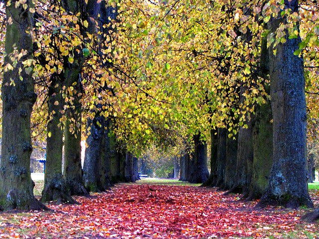 Autumn avenue.