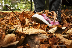fall under my feet (gobayode photography...times) Tags: autumn fallleaves fall fallcolors autumnleaves funpictures fallleafs autumnleafs undermyfeet autumngold fallgold fallundermyfeet