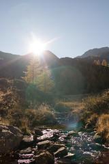 Pescia Alta (biologo) Tags: autumn sky plants sun alps water creek alpes season switzerland bach flare alpen plantae alpi ch larix pinaceae graubnden larixdecidua berninarange centraleasternalps brusio spermatophyta pinales easternalps