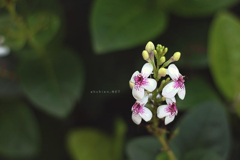 [ 花 ]