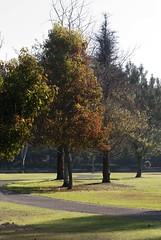 empty trails (shottwokill) Tags: morning autumn trees nature nikon nikkor 75300 scenics d80 hbpark