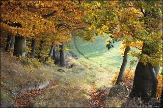 Herbstfarben am Waldrand