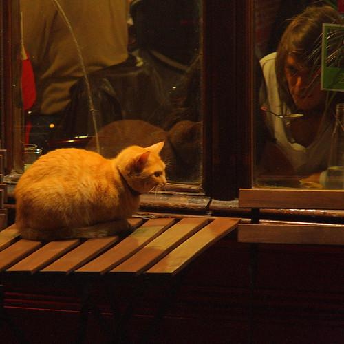 Montmartre cat