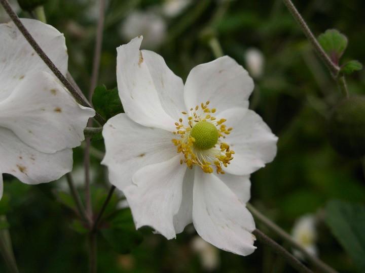 ubc botanical garden 011