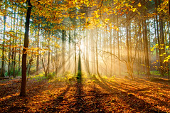 I am haunted by Light (Luuk Belgers) Tags: morning trees light sun color fall leaves forest landscape wideangle rays sunrays morningglory sunbeams d300