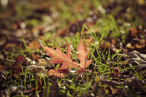 313:365 Leafy