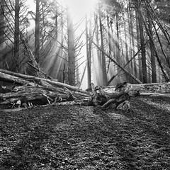 Rialto (Christopher DiNottia) Tags: park trees light wild sky bw plants sun white black color art nature ecology colors leaves rock fog forest woodland movie outside outdoors photography interesting intense woods scenery mood quiet peace view good earth timber country grow dramatic environmental olympus scene brush explore growth surprise vista environment growing wilderness drama powerful eco frontier exciting backwoods amaze godly remot
