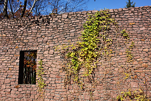 Wall-with-ivy