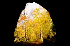 Autumn Tunnel (moaan) Tags: life autumn digital forest glow railway tunnel utata aomori glowing  21mm 2011 yagen superangulon autumnaltints discontinuedline inlife f34 leicasuperangulon21mmf34 intotheforest  ricohgxr gettyimagesjapanq4 gxrmounta12