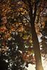 Tree (nateOne) Tags: california autumn 35mm iso200 walk paloalto schnivic 3570mmf28 nikond700 11600secatf40 focusdistance