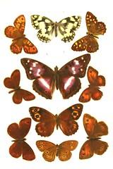 10butterflies