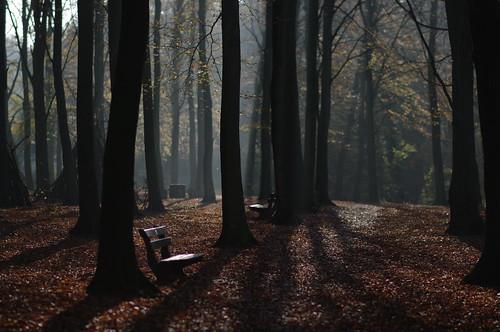 Herfstig Haagse Bos