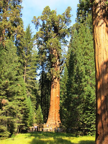 IMG_4022_Sherman_Tree_Trail_Sequoia_NP