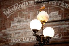 November Rain (Lux Oscura) Tags: street washington pigeon lux oscura