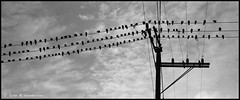 The Birds (jbhthescots) Tags: seattle bw usa wa 90mm kodaktmax400 hasselbladxpan