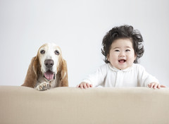 42-18714418 (ModernisticPhoto) Tags: people pet baby cute animals children mammal 1 infant asians looking furniture humor hound canine sofa whitebackground studioshot 612months seatingfurniture bassethound headandshoulders infancy domesticanimal domesticdog