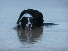 A happy boy (padraic_koen) Tags: kevin bordercollie southaustralia maslinbeach