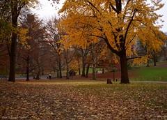 Autumn at the Sailboat Pond (CVerwaal) Tags: nyc newyorkcity autumn newyork fall colors analog olympusstylusepic fuji centralpark olympus ishootfilm oldschool autumncolors stylus fujisuperia autumninnewyork