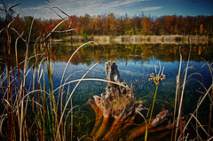 (lynn.h.armstrong) Tags: camera blue autumn trees red sky orange brown white ontario canada green art fall wet water grass yellow clouds forest lens geotagged photography photo high interesting pond mac weeds aperture nikon long flickr dynamic zoom ripple south images lynn h stump getty nikkor armstrong range hdr stormont vr licence afs request dx sault attribution ingleside 2011 ifed 18200mm f3556 noderivs vrii d7000 lynnharmstrong