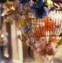 magical birdcage