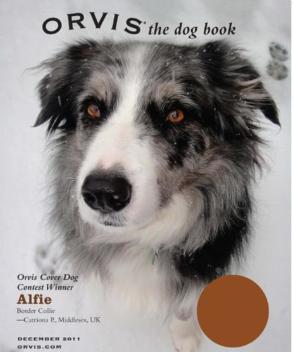 Orvis Cover Dog Photo Contest Winner 2011: Alfie