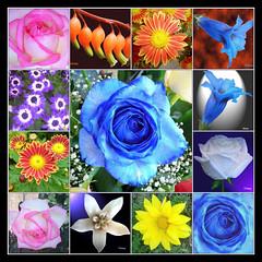 MOSAICO DE FLORES 1 (VRNU) Tags: flores de mosaico blackgroup vrnu floresporlapaz mygearandme mygearandmepremium giveme5awardthenext5pictures