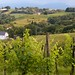 Jurancon Vineyards