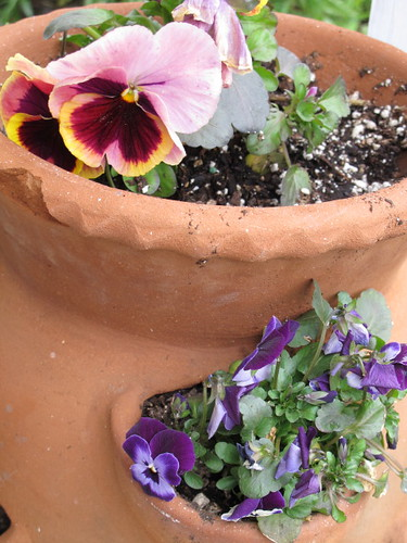 Thank goodness for pansies