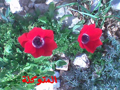 الاردن في الربيع صور 5909637854_c362ba7af9.jpg