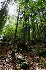 Triglav Forest (ABSE Photography) Tags: light tree green forest canon eos ray tokina shade 7d f28 116 1116mm
