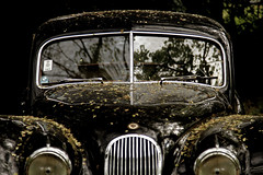 de frente (Diego Eidelman) Tags: auto old classic car canon vintage eos reflex antique front voiture collection explore 7d reflejo getty antiguo capot vieux gettyimages automovil frente coleccin clsico cap explora antigedad diegoeidelman autoclsica eidelmanphoto