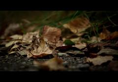 ... (amirosphere) Tags: autumn contrast gteborg colours outdoor gothenburg dslr k10d pentaxk10d smcpda1855mmf3556al kallebck justpentax pentaxart