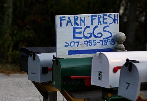 Fresh Eggs {sh 11}