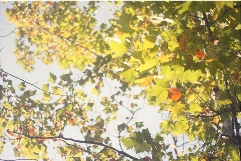 Screen Shot 2011-10-16 at 10.42.50 PM