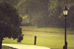 Rainy afternoon (uenokyouya) Tags: landscape nikon singapore lamppost 500mm botanicalgardens pathway bower f63 mirrorlens samyang d700 catadioptriclens