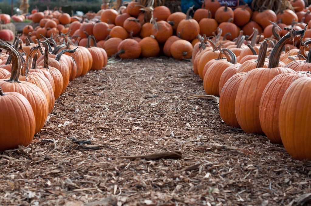 pumpkin avenue - the american way of life