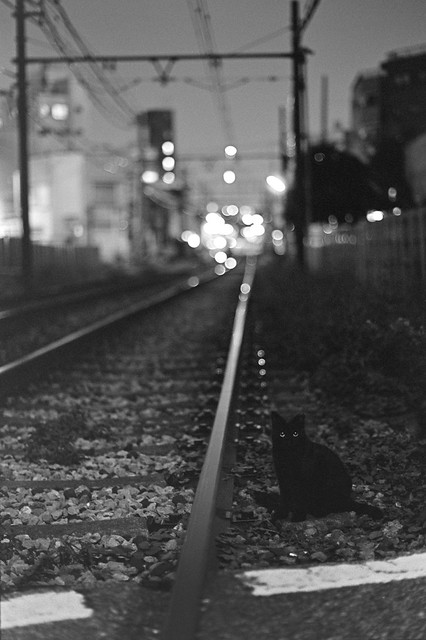 Wait on Night Train