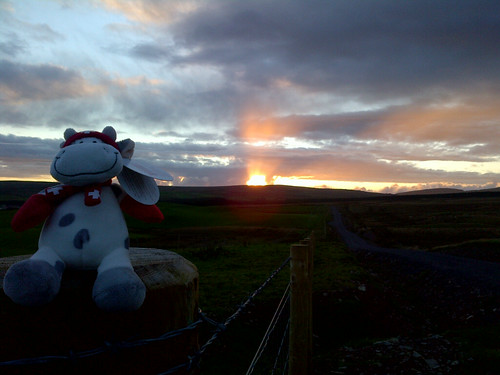 Cowzen enjoying a Scottish Sunset