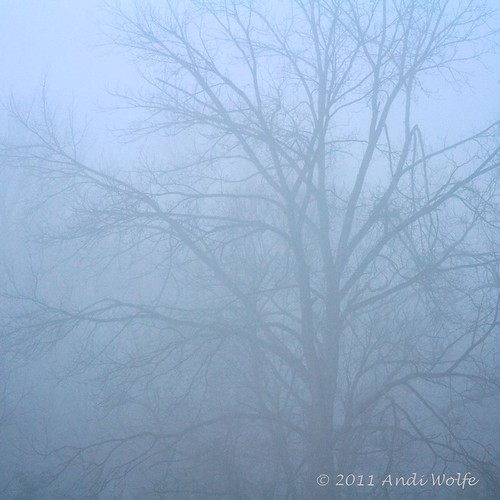 Tree in the mist by andiwolfe