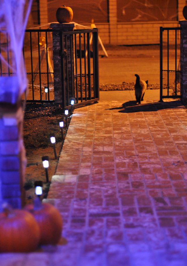walkway-cat-halloween decorations