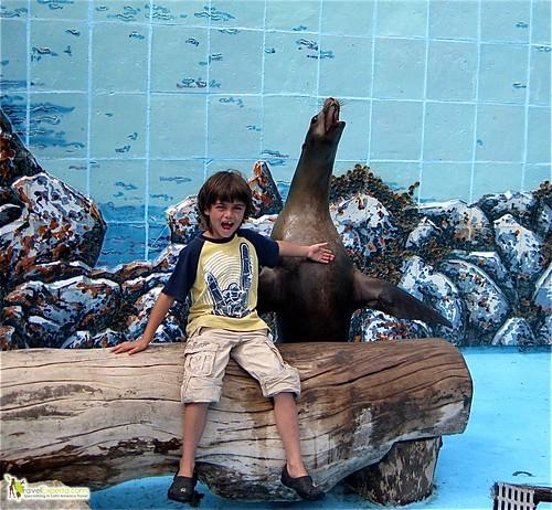 Sea Lion Bonding in National Aquarium in Havana Cuba