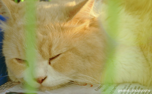 Sleepy..zZzZzz