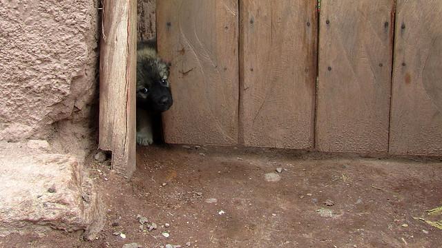 Shy Pup