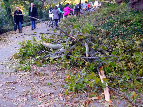 Central Park Clean up