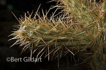 Appreciating cacti