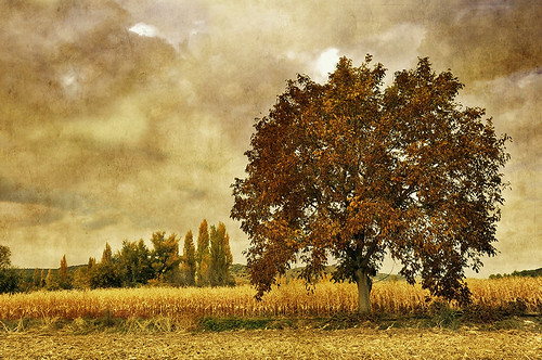 Otoño de maiz y nueces - Autumn of maize and nuts by Marco Antonio Losas